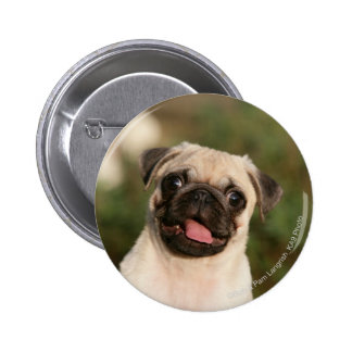 Fawn Pug Puppy Panting Button