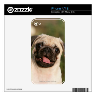 Fawn Pug Puppy Panting iPhone 4S Skins