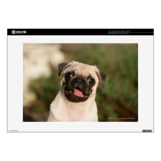 Fawn Pug Puppy Panting Laptop Decal