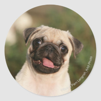 Fawn Pug Puppy Panting Round Stickers