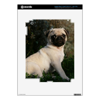 Fawn Pug Puppy Sitting iPad 3 Skin