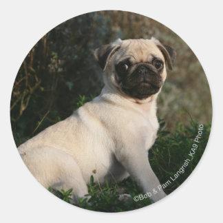 Fawn Pug Puppy Sitting Sticker