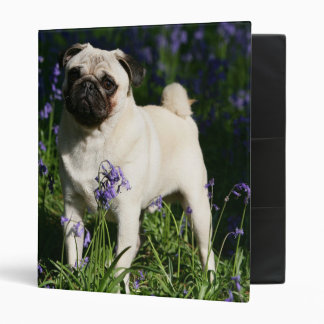 Fawn Pug Standing in the Bluebells 3 Ring Binder