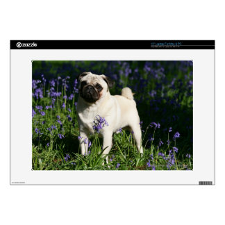 Fawn Pug Standing in the Bluebells Laptop Decal