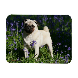 Fawn Pug Standing in the Bluebells Rectangular Photo Magnet