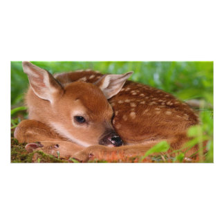 Fawn resting in the wild photo card