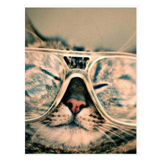Fear and Loathing Cat - Kitty in Hipster Glasses Postcard