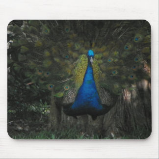 FEARLESS PEACOCK Mousepad
