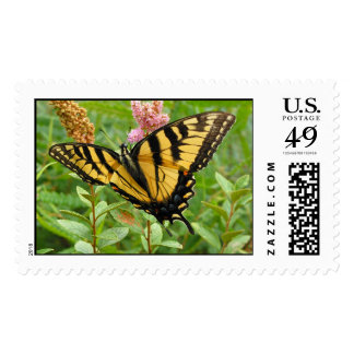 Feasting Butterfly Postage Stamp