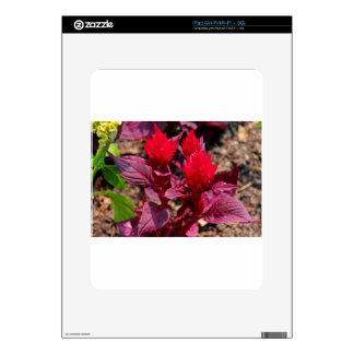Feather Celosia iPad Decals