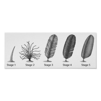 Feather Evolution Print
