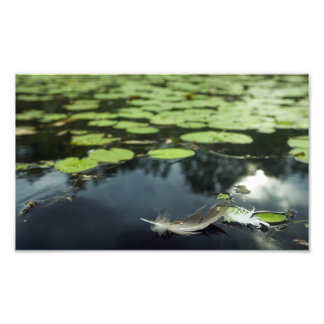 Feather in a Pond Art Photo