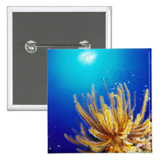 Feather star button