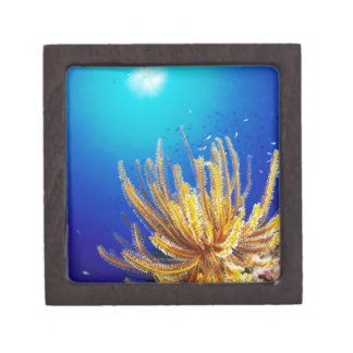Feather star keepsake box