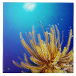 Feather star large square tile