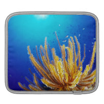 Feather star sleeve for iPads