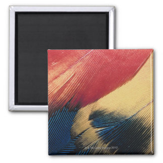 Feather surface 3 magnet