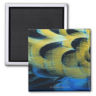 Feather surface 4 magnet
