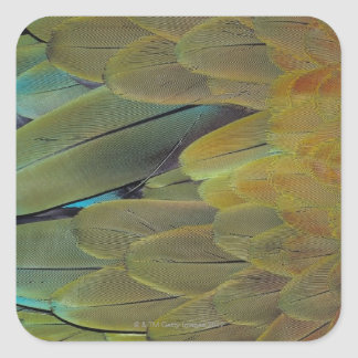 Feather surface square sticker