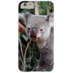 Featherdale Wildlife Park, Koala Bears Barely There iPhone 6 Plus Case