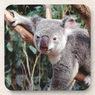 Featherdale Wildlife Park, Koala Bears Beverage Coaster