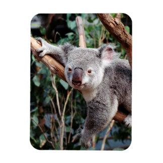 Featherdale Wildlife Park, Koala Bears Rectangular Photo Magnet