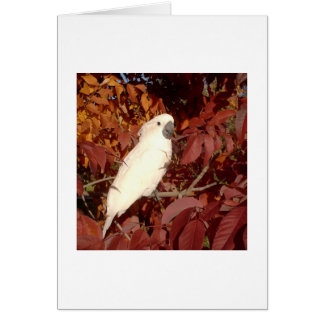 Feathered Family Cockatoo Note Card