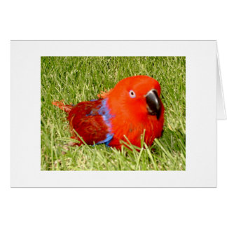 Feathered Family Parrot Rescue Greeting Card