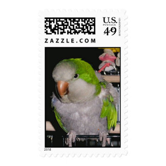 Feathered Family Parrot Rescue Stamp