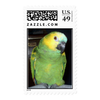Feathered Family Parrot Rescue Postage Stamp