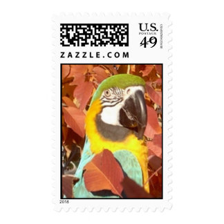Feathered Family Parrot Rescue Stamps