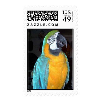 Feathered Family Parrot Rescue Postage