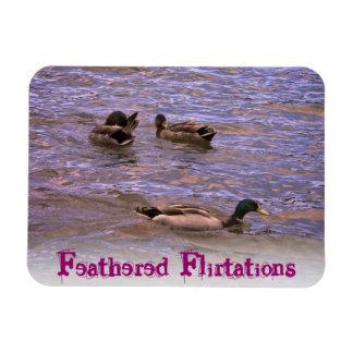 Feathered Flirtations Rectangular Photo Magnet