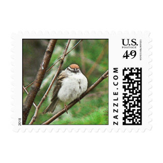 Feathered Friend Postage