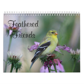 Feathered Friends - Wild Birds Calendar