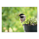 Feathered Greetings Greeting Card