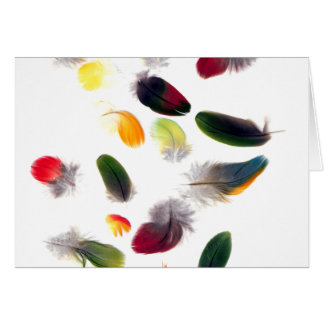 Feathers Drifting Greeting Card