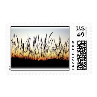 Feathers of the Plains Postage