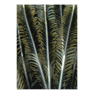 Feathery appearance of crinoid arms 5x7 paper invitation card
