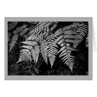 Feathery fern leaves in black and white greeting card