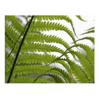 Feathery fronds postcard