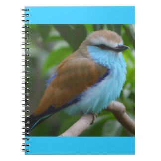 FEATHERY LITTLE BIRD BLUE BROWN WHITE BLACK ADORAB NOTEBOOKS