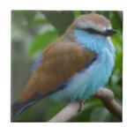 FEATHERY LITTLE BIRD BLUE BROWN WHITE BLACK ADORAB TILES