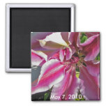 Featured Clematis May Magnet