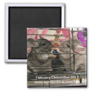 February chinchilla 2012 magnet