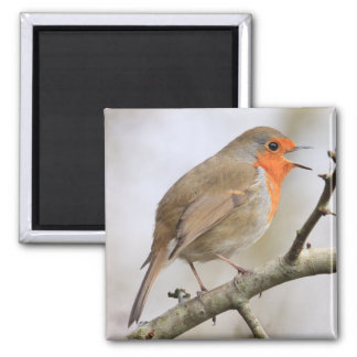 February Robin 2 Inch Square Magnet
