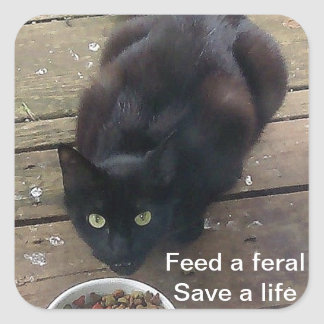 """""""Feed a Feral, Save a Life"""" feral cat stickers"""