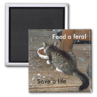 """Feed a Feral, Save a Life"" feral kitten magnet"