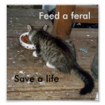 """""""Feed a Feral, Save a Life"""" feral kitten poster"""