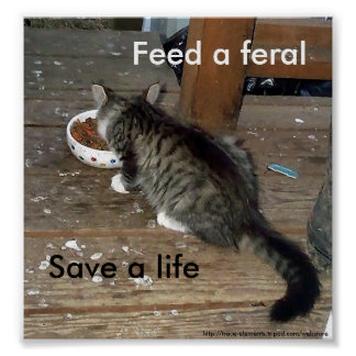 """Feed a Feral, Save a Life"" feral kitten poster"